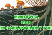 МИКОРИЗА