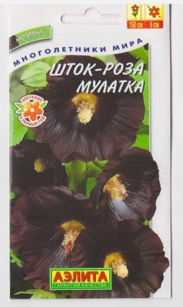 Шток-роза Мулатка