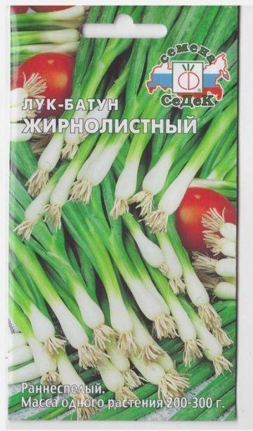 Лук Батун Жирнолистный