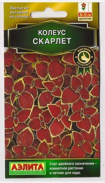 Колеус Блюме Скарлетт