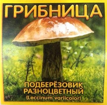 Грибница Подберезовик Разноцветный