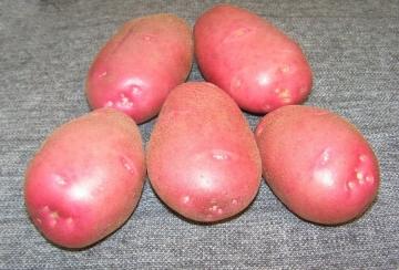 Картофель семенной Любава элита (4кг)