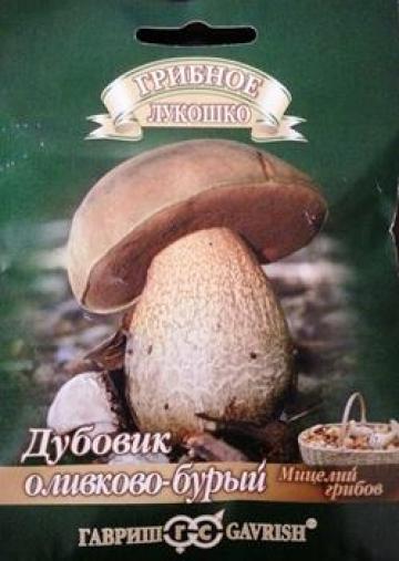 Грибы Дубовик оливково-бурый