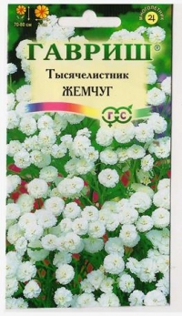 Тысячелистник Жемчуг белый