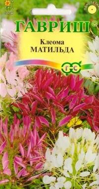 Клеома Матильда