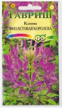 Клеома Фиолетовая королева