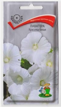 Лаватера Красотка Белая