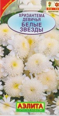 Хризантема Девичья Белые звезды