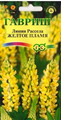Люпин Желтое пламя