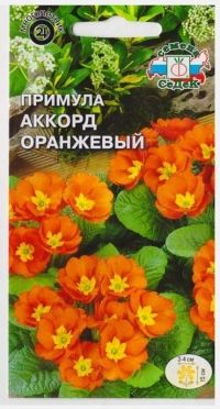 Примула Аккорд Оранжевый