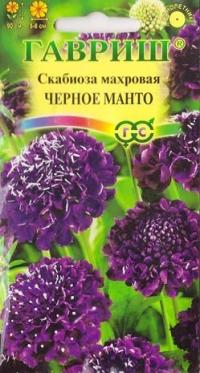 Скабиоза Черное Манто махровая