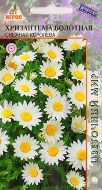 Хризантема Болотная Снежная королева