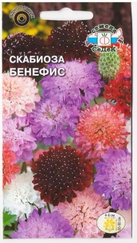 Скабиоза Бенефис