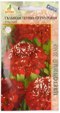 Скабиоза Темно-пурпуровая Красная