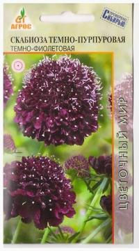 Скабиоза Темно-пурпуровая Темно-фиолетовая