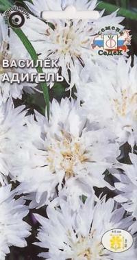 Василек Адигель  белый