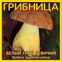 Грибница Белый гриб девичий