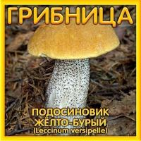 Грибница Подосиновик желто-бурый