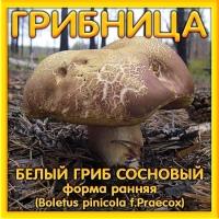 Грибница Белый гриб сосновый, форма ранняя