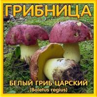 Грибница Белый гриб царский