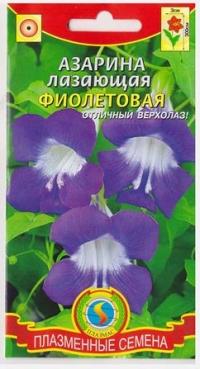 Азарина Фиолетовая лазающая