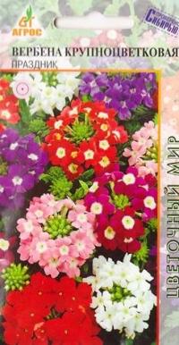 Вербена Праздник крупноцветковая