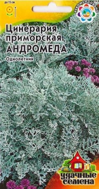 Цинерария Андромеда приморская