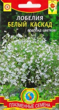 Лобелия Белый каскад