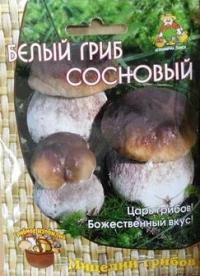 Грибы Белый гриб Сосновый