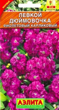 Левкой Дюймовочка фиолетовый