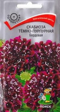 Скабиоза Темно-пурпурная Бордовая