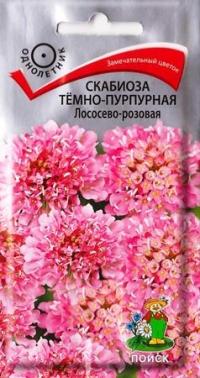 Скабиоза Темно-пурпурная Лососево-розовая