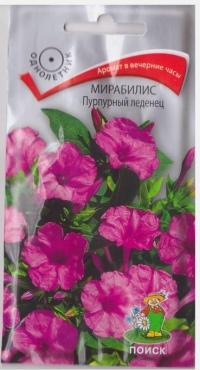 Мирабилис Пурпурный Леденец