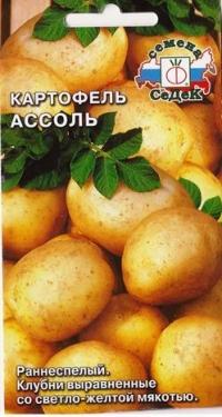 Картофель Ассоль