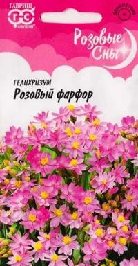 Гелихризум Розовый фарфор