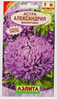 Астра Александрия Фиолетовая