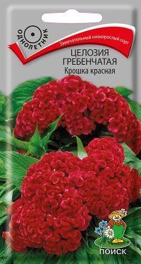 Целозия Гребенчатая Крошка Красная