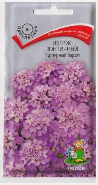 Иберис Пурпурный бархат