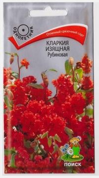 Кларкия Изящная Рубиновая