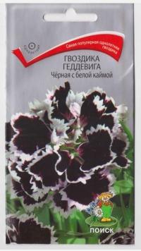 Гвоздика Геддевига Черная с бел каймой